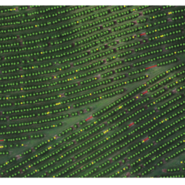 Mini-curso online avançado de agricultura com drones acontece em junho