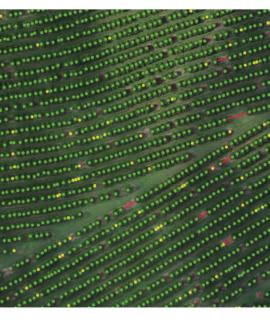 Replay: do básico ao avançado, veja como trabalhar com drones para mapeamento